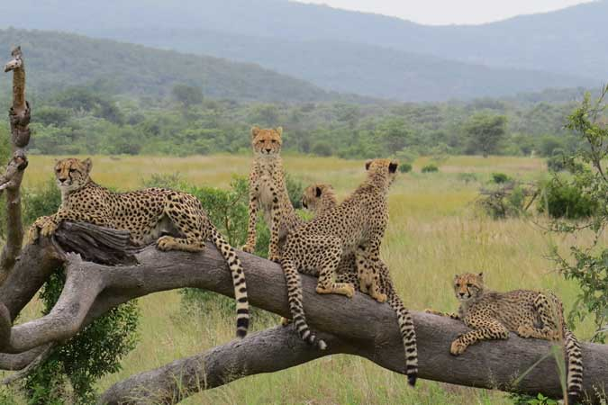 Safari lodges in south africa